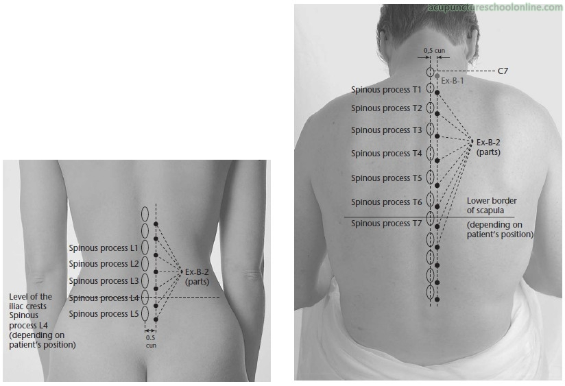 Acupuncture Point Extra Backwaist 2 Ex Bw 2 Huatuojiaji Hua